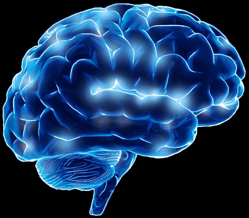 Cortexio brain image